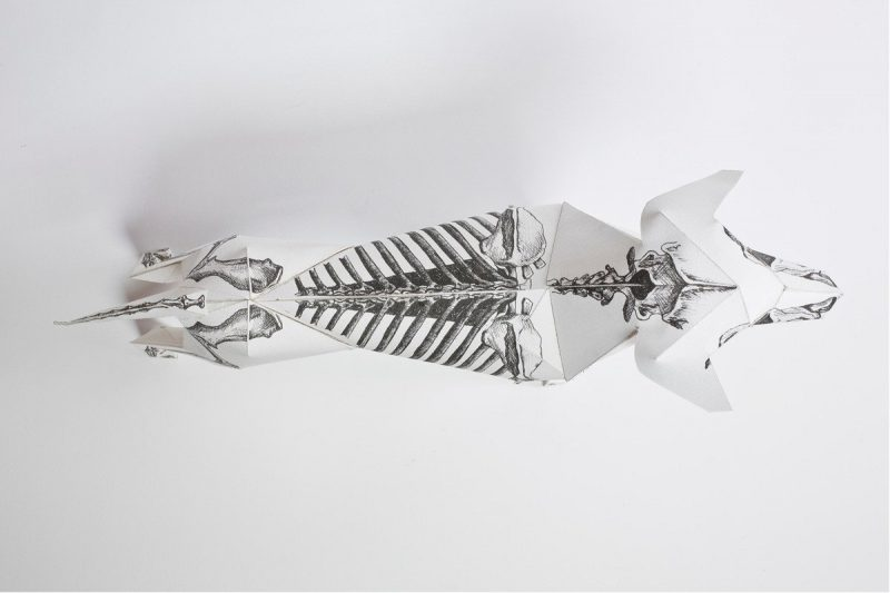 Over view of a 3D paper dog model that has an illustration of a skeleton on the model.