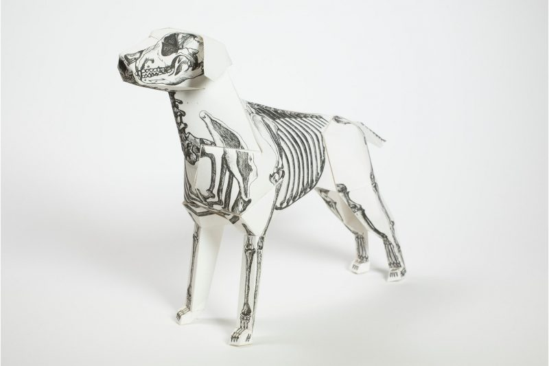 3D paper model of a dog with a skeleton drawn on it.
