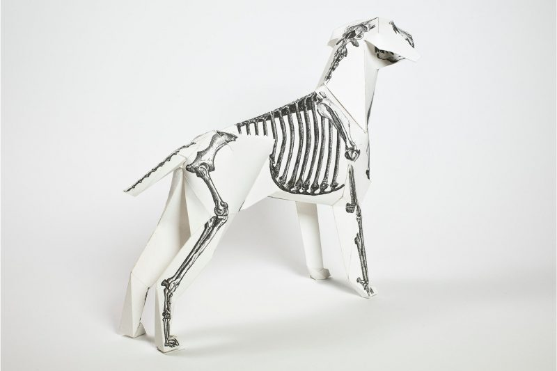 A paper dog model that has an illustration of a dog skeleton