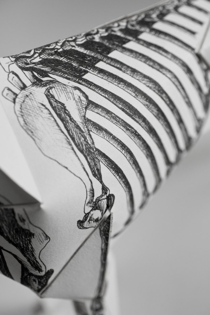 Close up view of a illutration on a paper dog model of a skeleton area specifically the ribs.