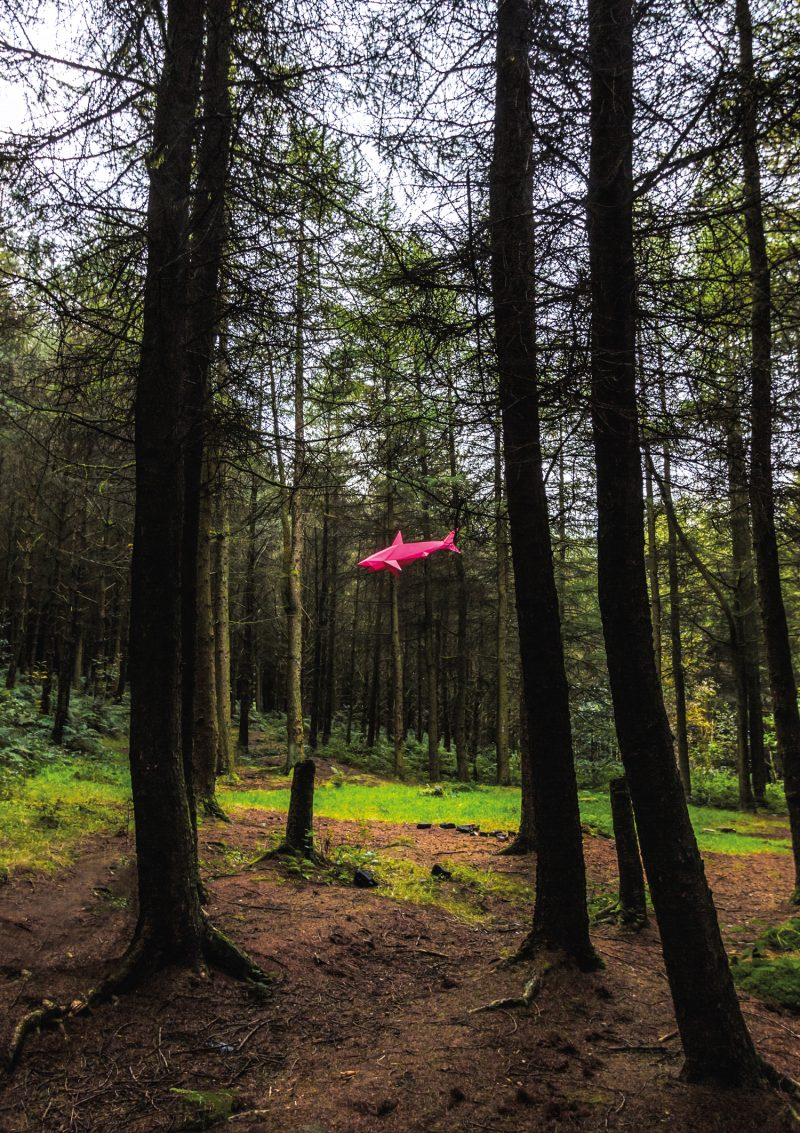 a woodland setting with a pink 3d paper shark sculpture flying in the distance background