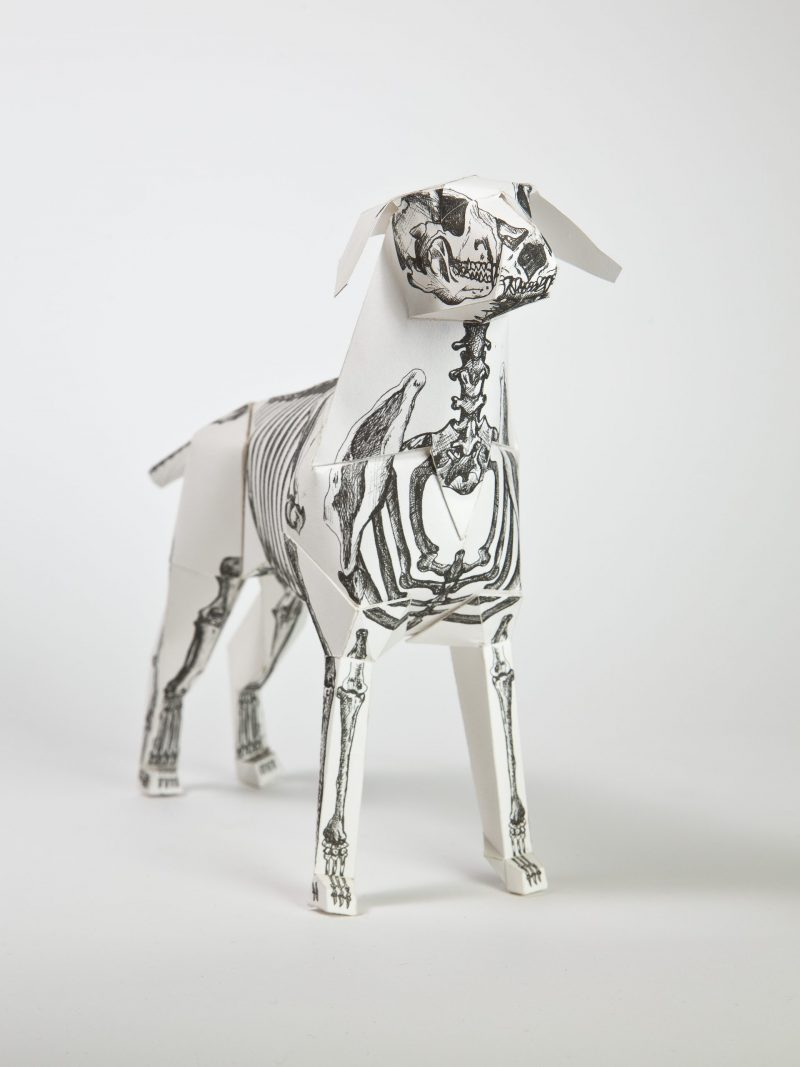 3D model of a paper dog with an illustration of a skeleton on it.